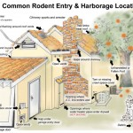 rodent removal entry sites