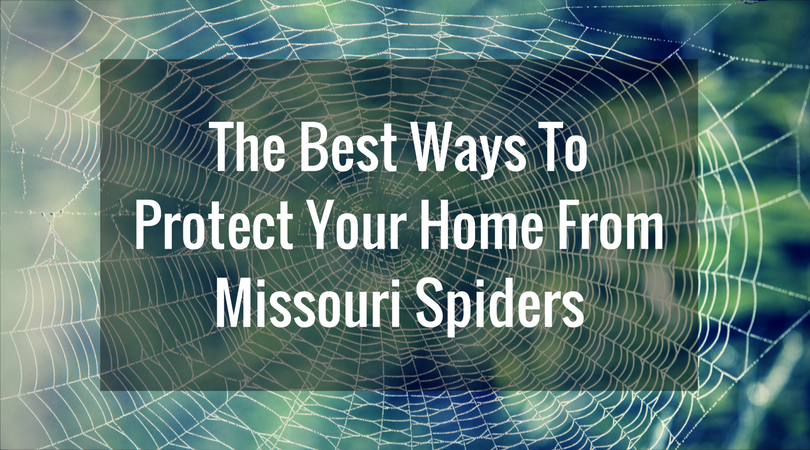 The Best Way To Protect Your Home From Missouri Spiders